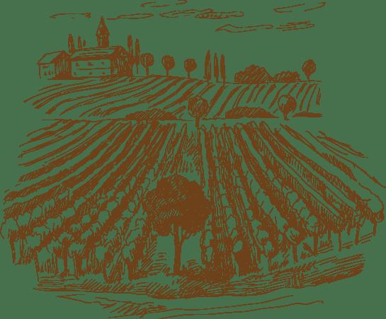 Regions-Vino